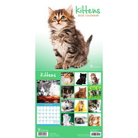 TF Publishing Kittens Mini Monthly Wall Calendar, 7