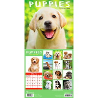 TF Publishing Puppies Mini Monthly Wall Calendar, 7